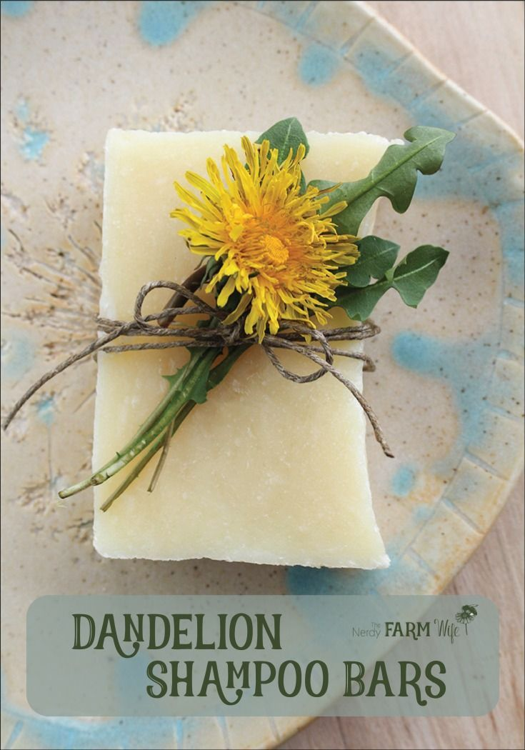 Dandelion Shampoo Bars Recipe - this sunny palm-free soap recipe is infused with...