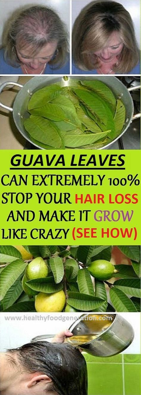 Guava Leaves Can Extremely 100% Stop Your Hair loss And Make It Grow Like Crazy ...
