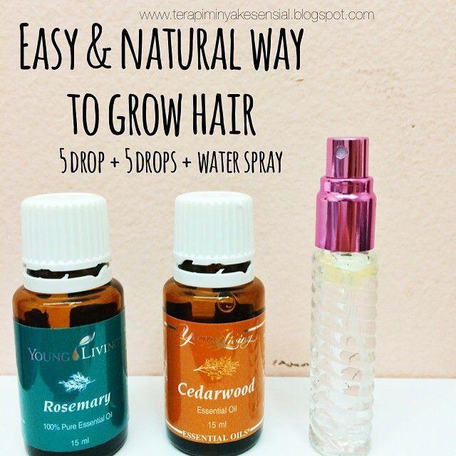 rosemary cedarwood for hair growth - Google Search