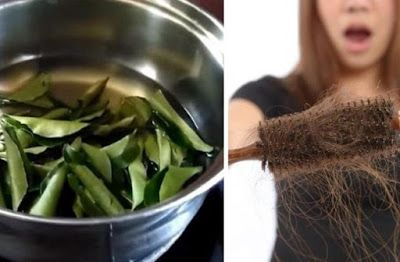 This Curry Leaf Oil Will Stop Hair Loss And Increase Hair Growth | Herbs Remedie...