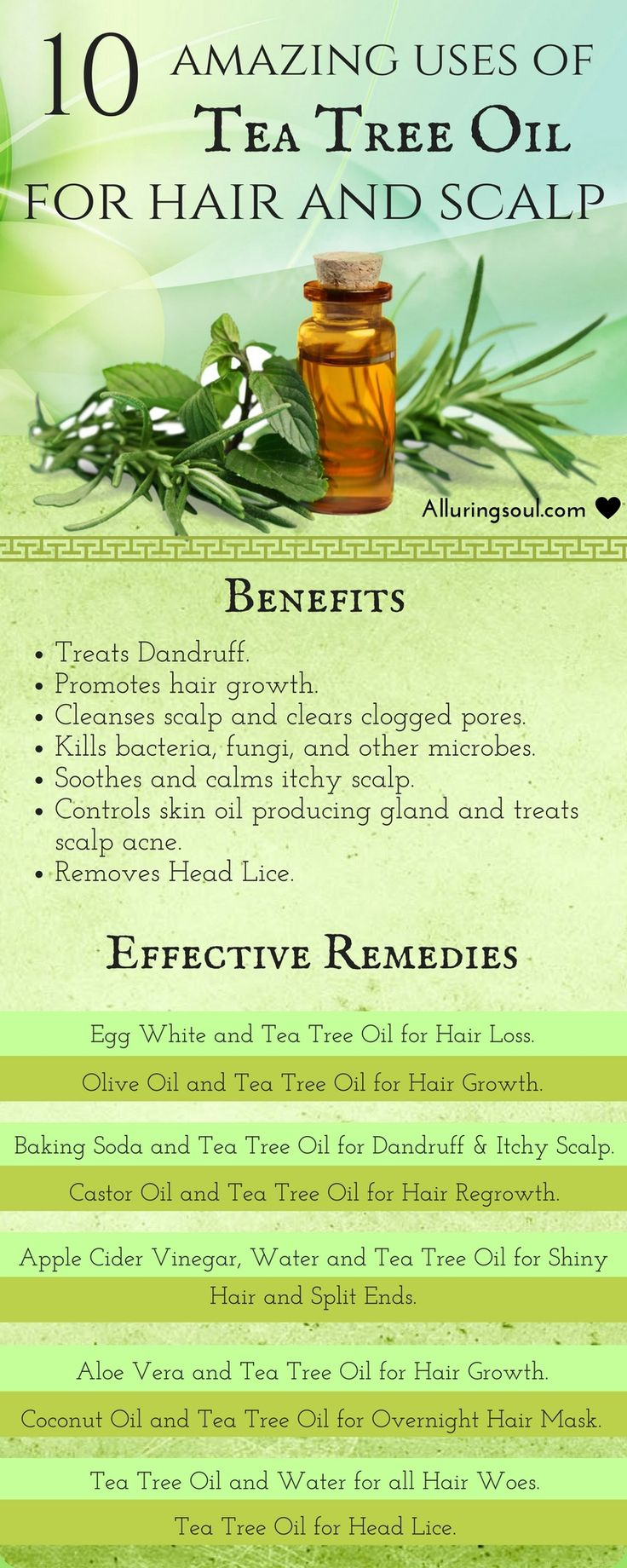Tea tree oil for hair is considered as one of the best herb's oil to treat h...